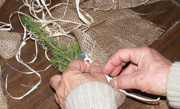 Wrapping a tiny red spruce tree for presentation .. burlap and raffia is a perennial favourite